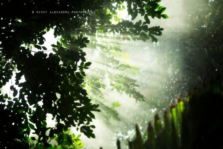 Botanic dream